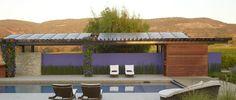 Home | Wadlund+ Design StudioWadlund+ Design Studio Modern Architects, Purple Walls, Drought Tolerant Plants, Green Landscape, Bay Area, Shades Of Green, Landscape Architecture, Restoration, Studio