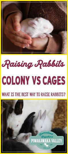 Do you have rabbits or are looking at getting them in the future? Are you looking for a more natural way of raising rabbits in your backyard? I have put together the pros and cons of keeping rabbits in cages versus keeping rabbits in a colony. Find out mo