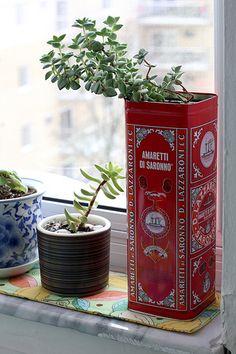 #home #window #plant