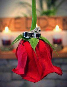 Wedding bands & Rose.