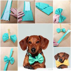 Best diy dog bow tie no sew bowties 24 ideas Best Picture For Dog Accessories summer For Your T Diy Dog Collar, Dog Collars, Dog Crafts, Creation Couture, Diy Holz, Dog Bows, Dog Bandana, Diy Stuffed Animals, Pet Clothes