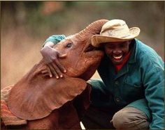 The David Sheldrick Wildlife Trust. Amazing orphanage for baby elephants and rhinos that have lost their parents, often due to poaching.