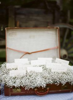 old suitcase as card holder..baby's breath or moss.