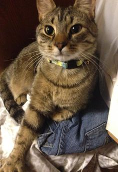 Lost Cat - Tabby - Montville, CT, United States 06382