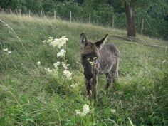 Tiere 2008 - Esel