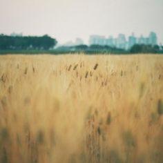 canon 포토갤러리 : 시민농장 보리밭