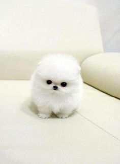 oh my gosh a snowball with a face :D