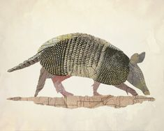 Armadillo by La Ferrerra Prints. Collaged from historic Texan maps. Archival giclee print on watercolor paper of digital collage. Limited edition of 50 prints. Map Collage, Digital Collage, Armadillo, Anta, Desenho Tattoo, Collage Making, Antique Maps, Cartography, Map Art