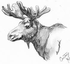 moose drawings - Google Search