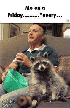 I want a raccoon