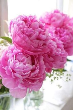 the smell of peonies,,,reminds me of the cottage at Cuba Lake where they grew under the windows all along the back. Amazing Flowers, My Flower, Beautiful Flowers, Peonies And Hydrangeas, Pink Peonies, Peony, Spring Flowers, Planting Flowers, Floral Arrangements