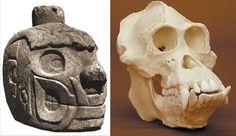 ape humanoid skull - Google Search