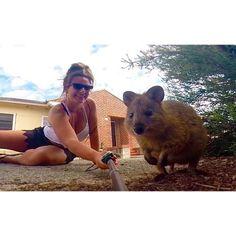 Life goals. Get selfies with as many animals as possible  #lifegoals #selfie #animals #australia #rottnest #rottnestisland #quokka #quokkaselfie #travel #adventure #gopro #nature #wildlife #westernaustralia #photograph by oliv_gee http://ift.tt/1L5GqLp