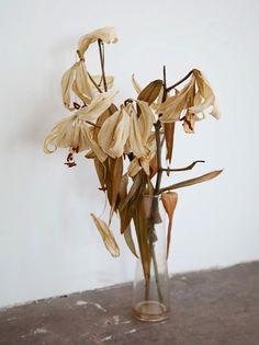 dead lilies
