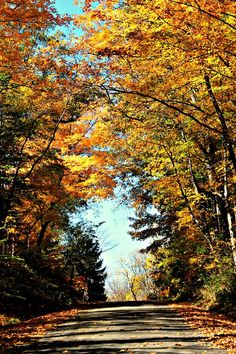 Take a drive out to Cowan Lake State Park - You will be delighted by the Fall Colors this Autumn! Still time for a sail, or plan a hike and picnic with your dear ones!  http://www.clintoncountyohio.com/list/parks/cowan-lake-state-park2  image credit: Sarah Newton  #FallColors #OhioStateParks #VisitClintonCounty