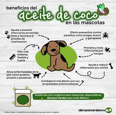 Benefits of Coconut Oil in pets - Why is it good for dogs and cats to consume coconut oil daily? Love Pet, I Love Dogs, Puppy Love, Baby Dogs, Pet Dogs, Cortes Poodle, Animals And Pets, Cute Animals, Dog Bakery