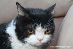 Grumpy Cat's brother Pokey. #Pokey #photo meme on www.pinterest.com/erikakaisersot