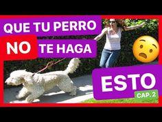 - YouTube Pugs, Dinosaur Stuffed Animal, Youtube, Animals, Dog Shampoo, Walking, Doggies, Tips, Gatos