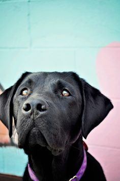Tips and Tricks for Photographing Black Dogs www.bewitchedmephotography.com #dog #dogphotography #petphotography #dogphotographytips #petphotographytips #photographingpets #photographingdogs #blackdogphototips
