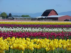 Tulip Town been there :)