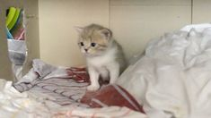 Kitten - first steps