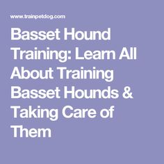 Basset Hound Training: Learn All About Training Basset Hounds & Taking Care of Them