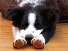 sleepy doggie