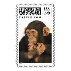 =>>Cheap          	Chimpanzee (Pan troglodytes). Young playfull 2 Postage Stamp           	Chimpanzee (Pan troglodytes). Young playfull 2 Postage Stamp Yes I can say you are on right site we just collected best shopping store that haveReview          	Chimpanzee (Pan troglodytes). Young playfu...Cleck Hot Deals >>> http://www.zazzle.com/chimpanzee_pan_troglodytes_young_playfull_2_postage-172223240947626828?rf=238627982471231924&zbar=1&tc=terrest