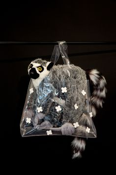 Zoboomafoo should have capitalized on how chic a lemur looks in a purse.