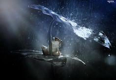 Rain, leaf, strange frog, frog