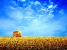 favorite part of summer is fresh cut hay