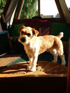 Dexter loves life on a canal boat http://www.roverrecommended.com