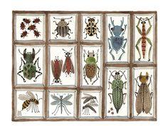beetles weevils & flies no. 5