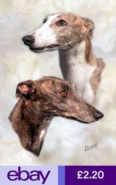 No 1 Greyhound Get Well Soon Card By Starprint