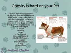 Animal Hospital At Tatum Ranch - Obesity is hard on your pet
