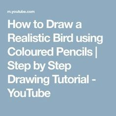 How to Draw a Realistic Bird using Coloured Pencils   Step by Step Drawing Tutorial - YouTube