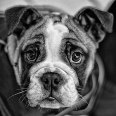 Puppy Face [Explored - Front Page] | Flickr - Photo Sharing!