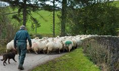 Britain farmers have a high fear to a non-deal Brexit: their priority market is the EU, and they could not pay the future export taxes. Safety Audit, French Government, In Pursuit, Health And Safety, Vulnerability, Farmers, The Locals, Britain