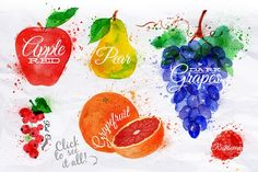 Fruit Watercolor - Illustrations
