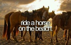 I can even walk straight on a beach how's a horse going to keep its self together?