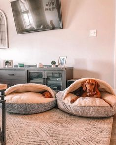 Cozy Caves for the win! - @canoli.vizslas 🐶