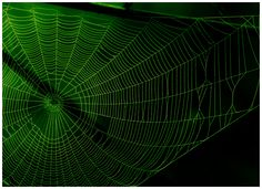 green web by Dave Engledow on Fotoblur | Nature Photography
