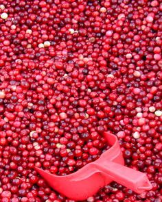 Cranberries at Harvest in Washington State