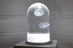The Darwin Tank allows you to keep jellyfish in your house. Because jellyfish don't have a brain and only need the right kind of water, food, and a current to live happily, it is just like keeping a potted plant in your home.
