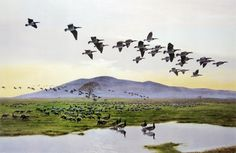 Sir Peter Markham Scott: Barnacle Geese at Caerlaverock The Wild Geese, Natural History, Bird Paintings, Birds, Gallery, Artists, Frame, Paintings Of Birds, Picture Frame