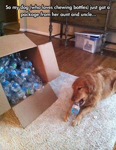 "Best family ever ""So my dog (who loves chewing bottles) just got a package from her aunt and uncle."" ~ Dog Shaming shame - - Funny Pictures Of The Day – 92 Pics Cute Funny Animals, Funny Cute, Funny Dogs, Hilarious, Cute Puppies, Cute Dogs, Dogs And Puppies, Doggies, I Love Dogs"
