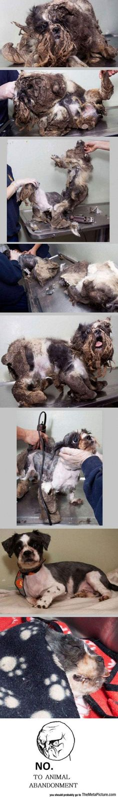 Pets are FOREVER!! Don't shop - ADOPT!! :) Rescued From The Worst Conditions And Saved