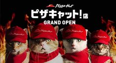 Pizza Hut Japan run by cats