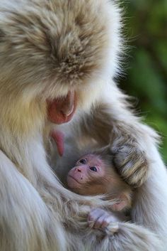 16-moments-about-animal-parenting-creative-picture-digital-photography-idea (12)