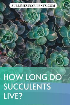 Wondering how long do succulents live? To make the most out of your succulent garden, you want your plants to live as long as possible, so it's important to take proper care of them. This means providing them with an environment similar to the one they are native to, without the added stressors of living in the wild, of course. Check this pin for full guide! #succulentlife #succulentcare #succulent #gardening Propagating Succulents, Cacti And Succulents, Cactus Plants, Fast Growing Plants, Growing Seeds, Succulent Care, Succulent Gardening, Types Of Soil, Types Of Plants